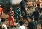 災害救助犬トレーニング(4)
