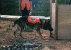 災害救助犬トレーニング(8)