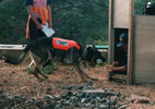 災害救助犬トレーニング(9)