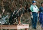 災害救助犬トレーニング(12)