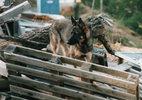 災害救助犬トレーニング(14)