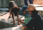 災害救助犬トレーニング(2)