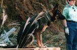 災害救助犬トレーニング(3)